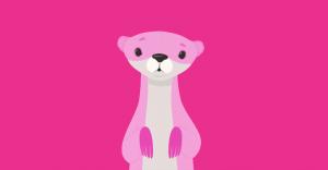 pink carnival ferret